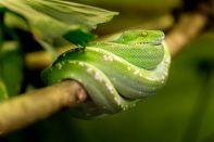 snake-1634293__480