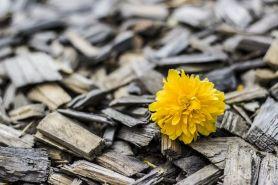 yellow-370256__480