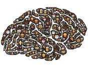 brain-954821__480
