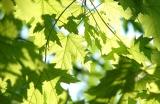 leaves-291024__480.jpg