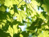 leaves-291024__480