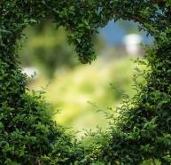 heart-1192662__480