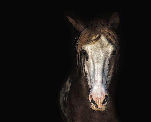 horse-3198112__480