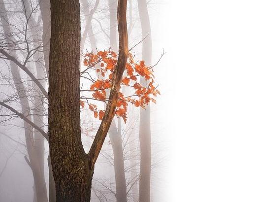 autumn-2857032__480
